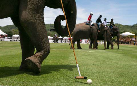 The Story So Far The 10 Travel Incentive Trends of 2016 Elephant Polo